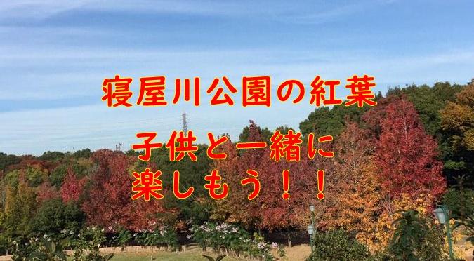箕面公園紅葉の見頃【2019】ライトアップの時間は?