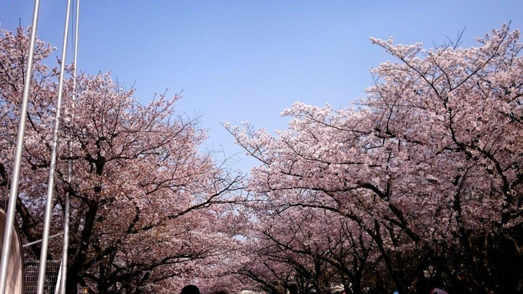 万博記念公園の花見の混雑状況や穴場スポット【2020年最新】