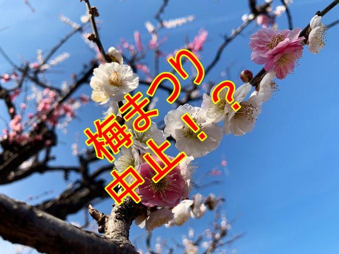 万博記念公園の梅まつり2020年は中止!?