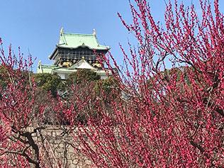 大阪城の梅林公園2020年の見頃はいつまで?屋台は出るの?