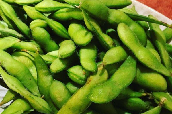 家庭菜園の初心者|プランターで枝豆を作ろう!【枝豆は家庭菜園初心者向け!】