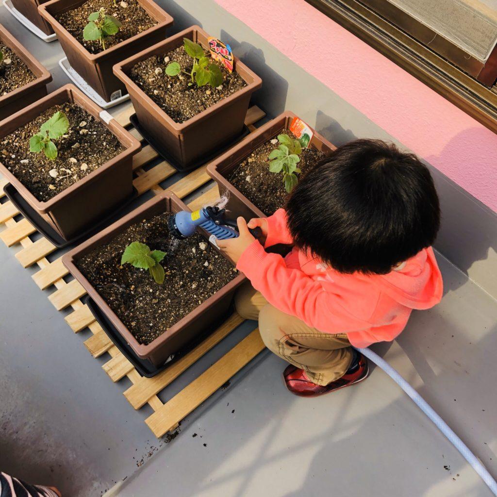 初心者がプランター家庭菜園で枝豆を作った!枝豆の成長日記