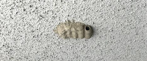 ジガバチの巣を駆除!危険や毒はあるの?
